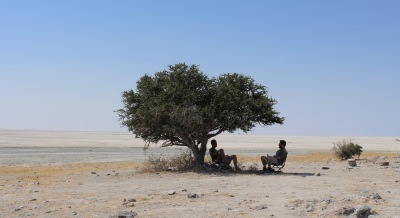 Kubu under the tree