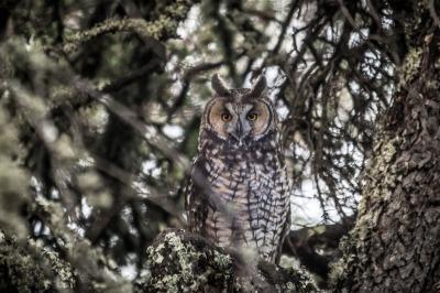 Whoo hooo! Owls!
