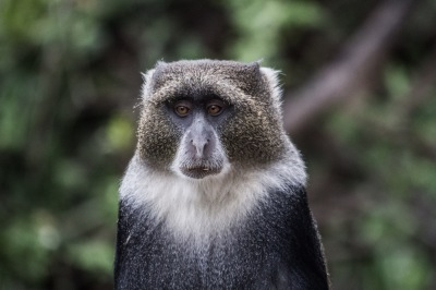 Christopher Colobus