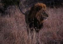 Ngala - Lions & Rhinos-1243