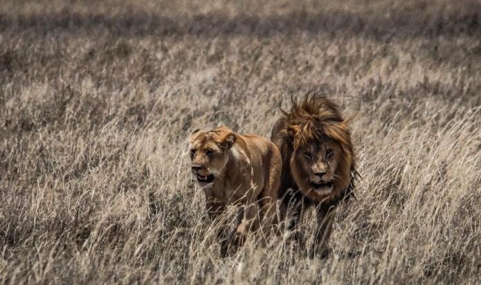 serengeti-3115