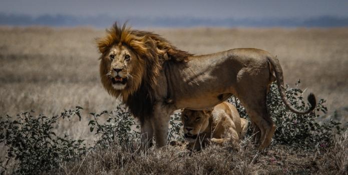 serengeti-3178