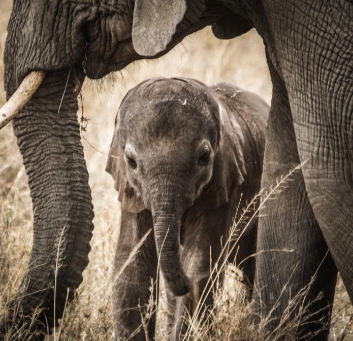 serengeti-3282