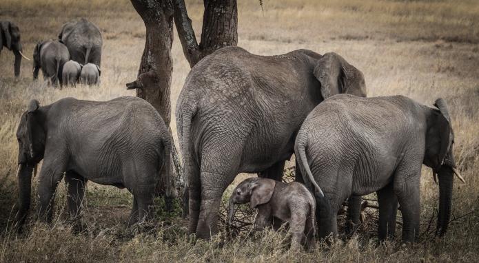serengeti-3333