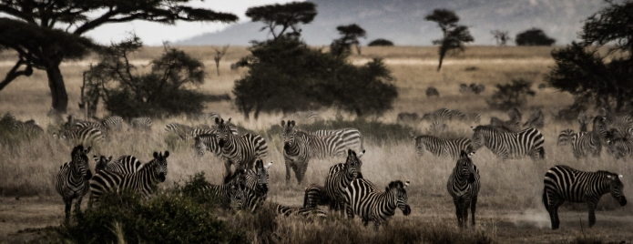 serengeti-3393