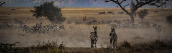 serengeti-3419