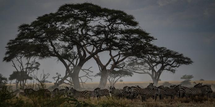 serengeti-3457