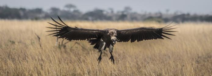 serengeti-3551