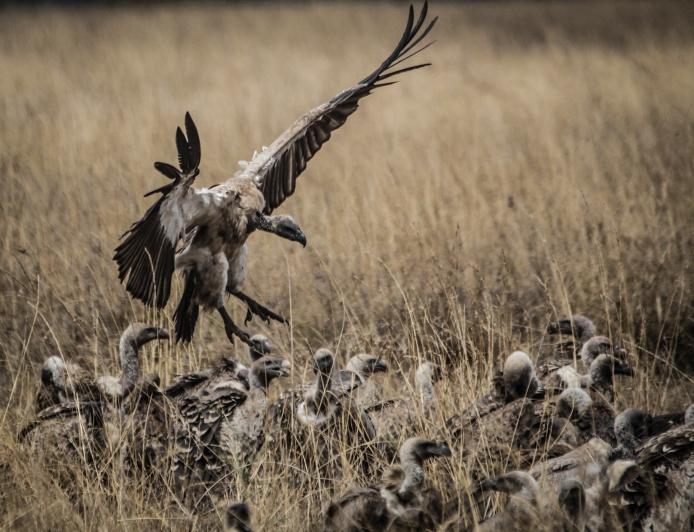 serengeti-3560